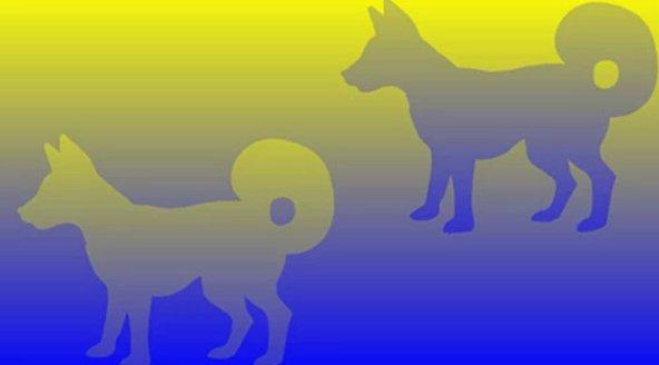 color-illusion-dogs